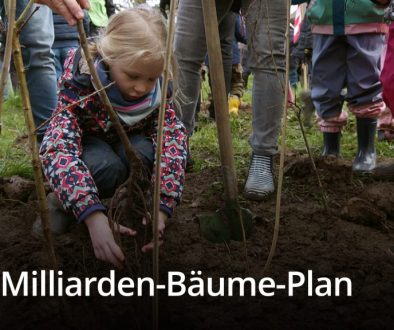 The Billion Tree Plan