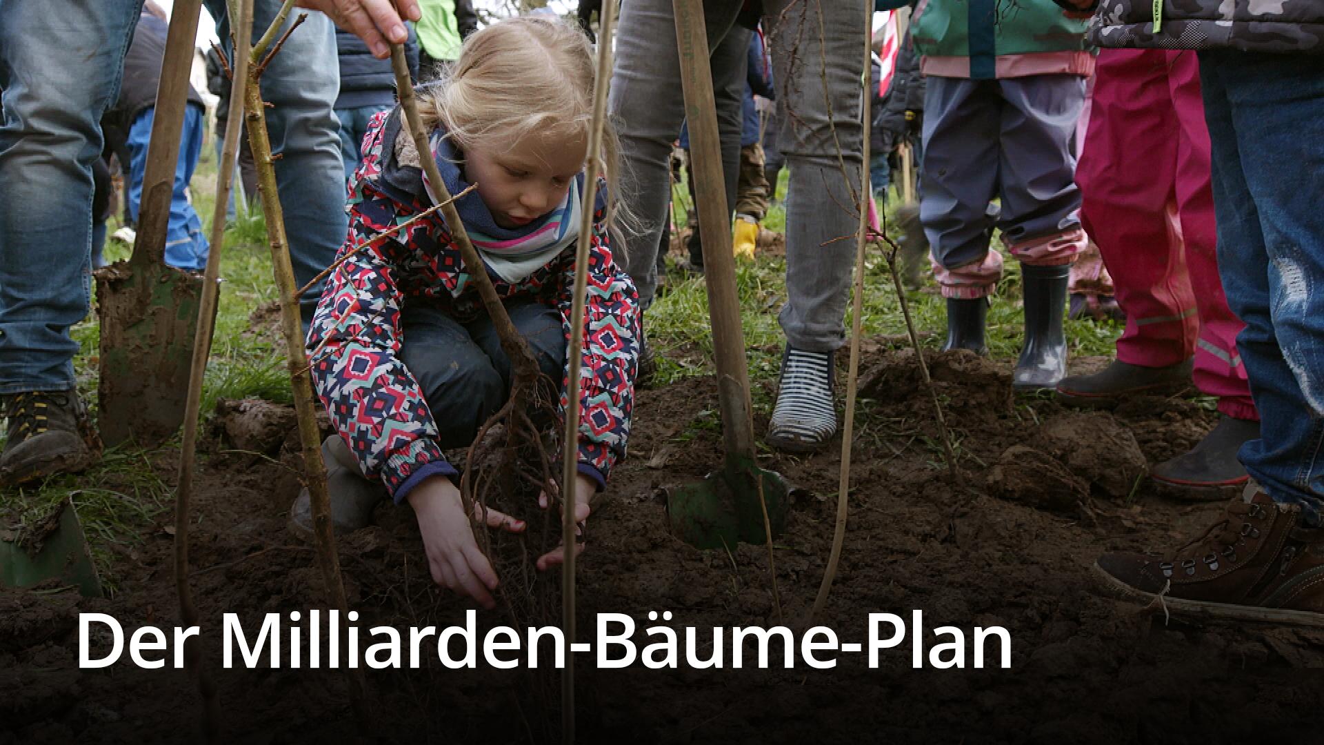 Der Milliarden-Bäume-Plan