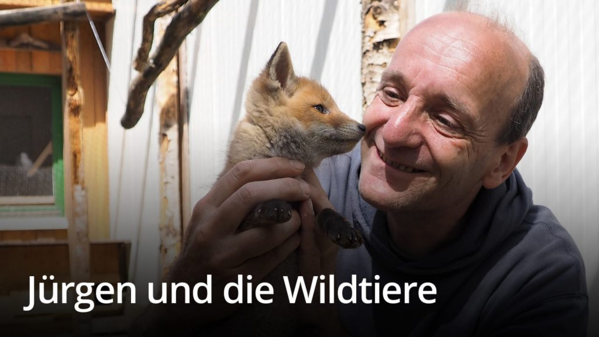 Saving the wild animals